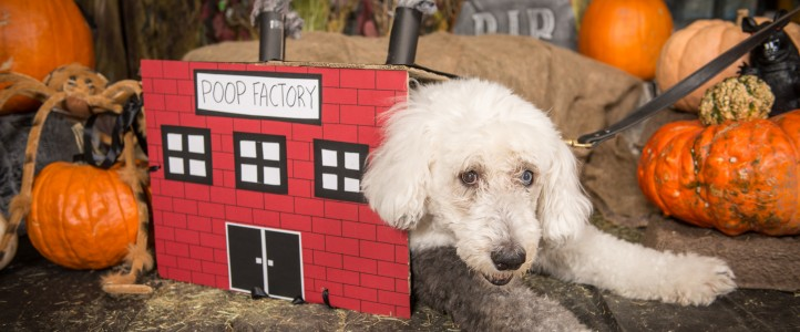 2015 Halloween pet photos