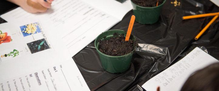 Warman Collective Garden – Grade 3 classes